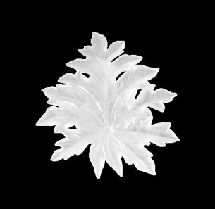 Daum  Borneo  Small white wall leaf with long fixing 14 in.